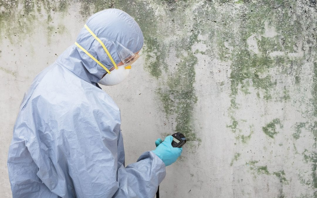 Mold Removal Services For Complete Remedy